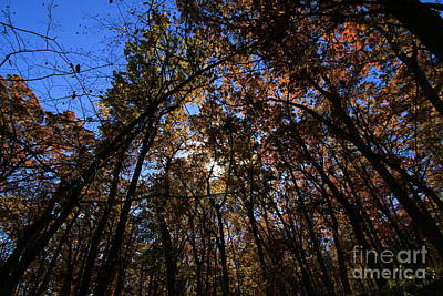 Photograph - Looking Up #3 by Rick Rauzi