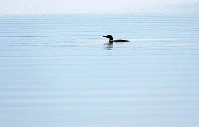 Photograph - Loon In Early Morning Light by Debbie Oppermann