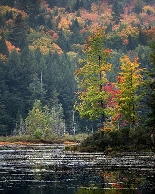 Photograph - Loon Lake by Brad Wenskoski