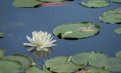 Photograph - Lotus Flower F by Jim Dollar