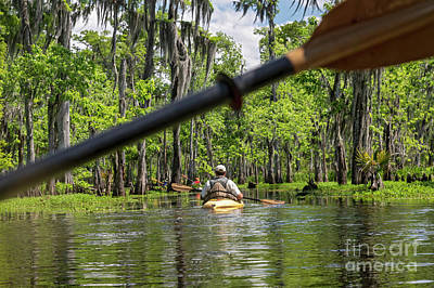 Photograph - Louisiana Bayou by Jim West