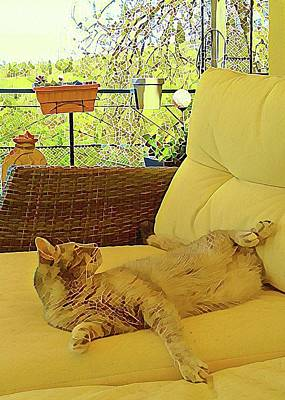 Photograph - Lounging Around by Dorothy Berry-Lound