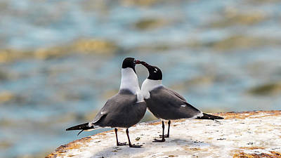 Photograph - Love Birds by Dheeraj Mutha