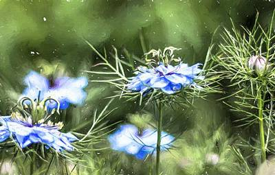 Photograph - Love In The Mist Painting by Carol Montoya