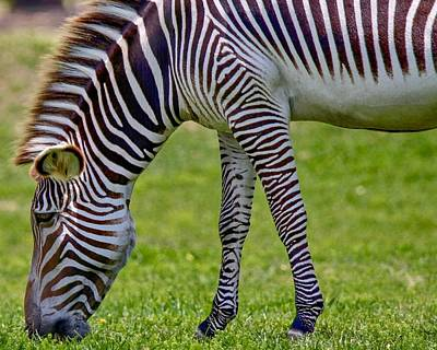 Photograph - Love Zebras by Susan Rydberg