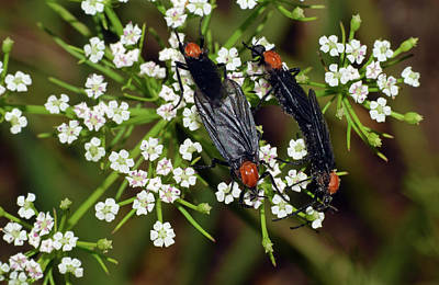 Photograph - Lovebugs by Larah McElroy