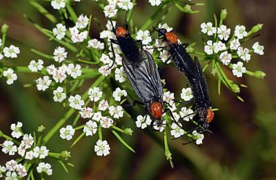 Photograph - Lovebugs by Larah McElroy