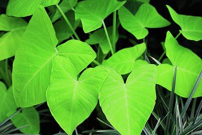 Photograph - Lovely Green Leaves by Nareeta Martin