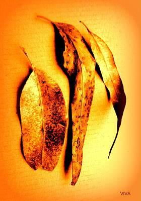 Photograph - Lovely Leaves Study by VIVA Anderson
