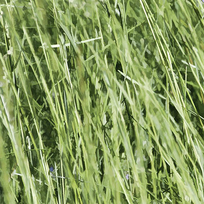 Photograph - Loving Long Grass - by Julie Weber