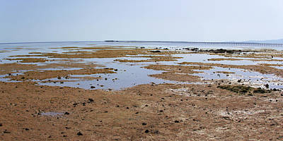 Photograph - Low Tide In Nabq Bay by Sun Travels