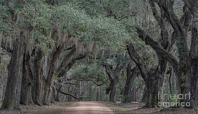 Photograph - Lowcountry Avenue Of Oaks  by Dale Powell