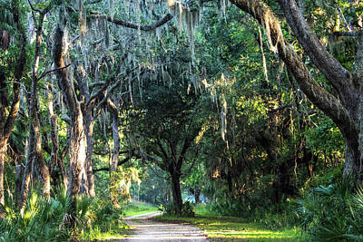 Design Pics - Lowcountry Forest by Mary Ann Artz