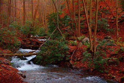 Art Print featuring the photograph Lower Dunnfield Creek In The Fall by Raymond Salani III