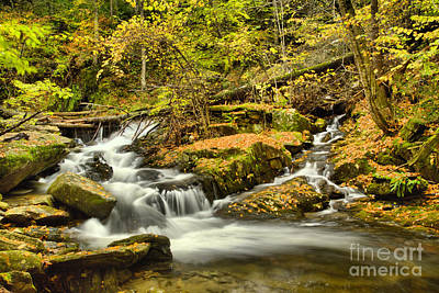 Photograph - Lower Sanderson Brook Falls by Adam Jewell