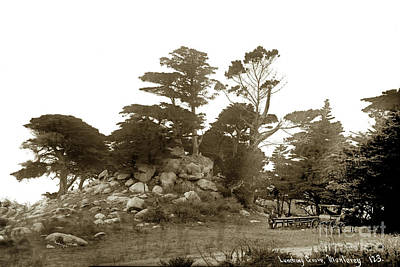 Photograph - Lunching Grove 17 Mile Drive Pebble Beach by California Views Mr Pat Hathaway Archives