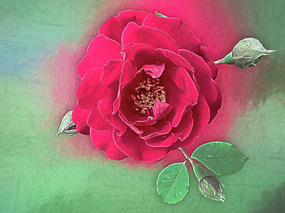 Photograph - Luscious Red Rose by Leslie Montgomery