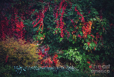 Photograph - Lush Foliage With Colorful Fall Leaves. by Michal Bednarek