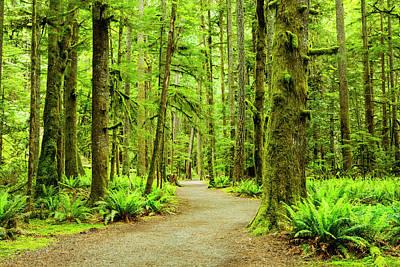 Lush Green Rain Forest Art Print by Jordan Siemens