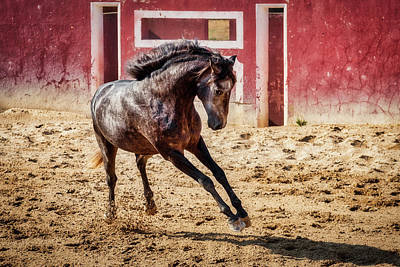Photograph - Lusitano Stallion #3 - Portugal by Stuart Litoff