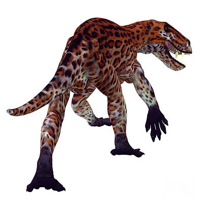 Antlers - Lycaenops Cat Tail by Corey Ford