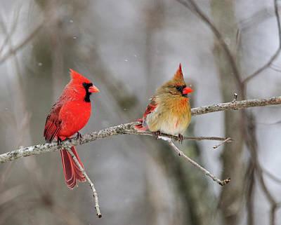 Ma And Pa Cardinal Original