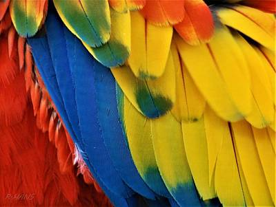 Photograph - Macaw Feathers I I by Rob Hans