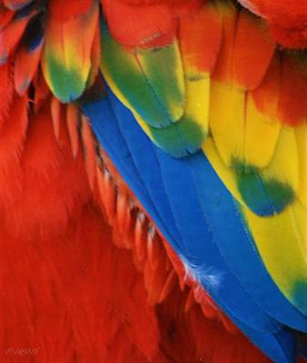 Photograph - Macaw Feathers V by Rob Hans