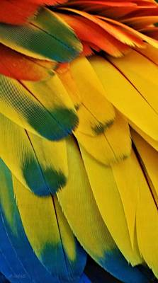 Photograph - Macaw Feathers I by Rob Hans