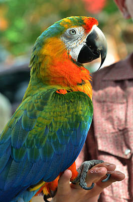Photograph - Macaw Profile by Kae Cheatham