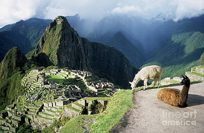 Peru Photograph - Machu Picchu And Llamas by James Brunker