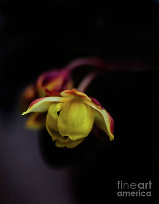 Photograph - Macro Beauty by Susan Warren