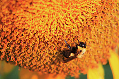 Moody Trees - Macro Bumblebee Pollinating  by Selena Lorraine