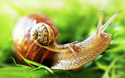 Animal Family Photograph - Macro Shot Of Snail by Copyright Oneliapg Photography