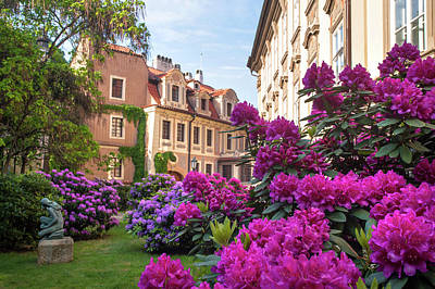 Photograph - Magenta Blooms In Kolowrat Garden Prague 1 by Jenny Rainbow