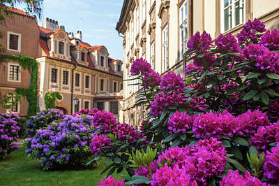 Photograph - Magenta Blooms In Kolowrat Garden Prague by Jenny Rainbow
