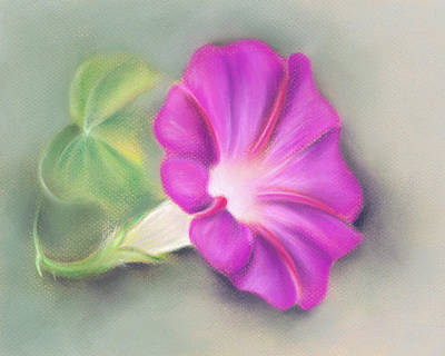 Pastel - Magenta Morning Glory And Leaf by MM Anderson