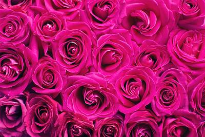 Photograph - Magenta Roses by Top Wallpapers
