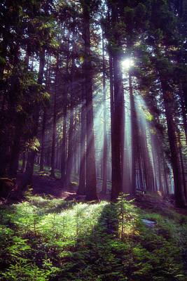 Photograph - Magic Forest by Raffaella Lunelli