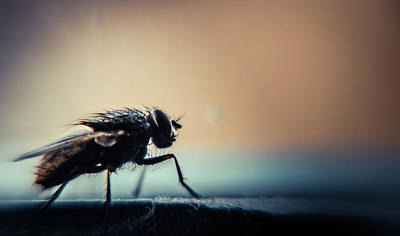Insect Photograph - Magic Of Creatures In Nature by Sherif A. Wagih (s.wagih@hotmail.com)
