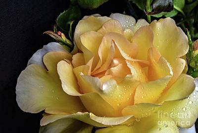 Design Turnpike Vintage Farmouse - Magnificent Gold Struck Rose by Cindy Treger