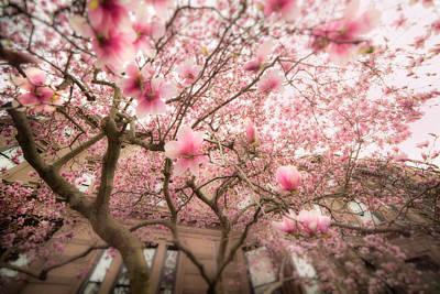 Photograph - Magnolia Blossoms by Joann Vitali
