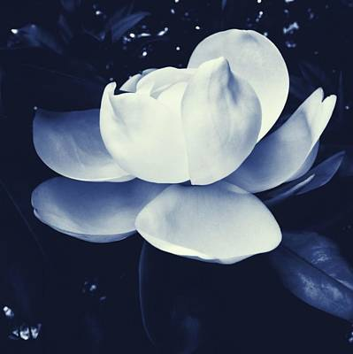 Lady Bug - Magnolia Blues 2 by Carey Smith