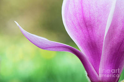 Photograph - Magnolia Denudata Forests Pink Flower by Tim Gainey