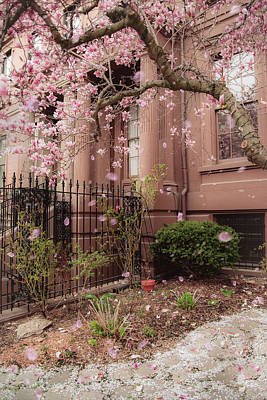 Photograph - Magnolia Spring - Back Bay Boston by Joann Vitali
