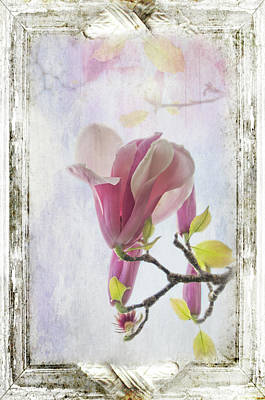 Photograph - Blooming Magnolia Flowers by Marilyn Wilson