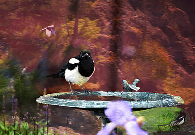 Photograph - Magpie Montage by Kae Cheatham
