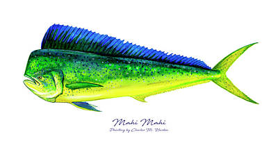 Sports Paintings - Mahi Mahi by Charles Harden