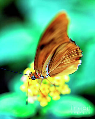 Photograph - Majestic Butterfly by John Rizzuto