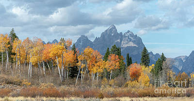 Photograph - Majestic Fall - Grand Teton  by Sandra Bronstein